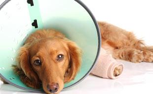 Haustierversicherung: wenn das Herrchen aus dem Haus ist, tanzt das Hündchen