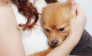 Animaux de compagnie : éduquer son chien à rester seul