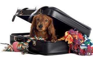 Haustierversicherung: umsorgen Sie Ihr Haustier wie sich selber