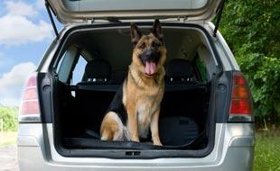 Tiere im Auto: Anweisungen und Sicherheitsvorrichtungen