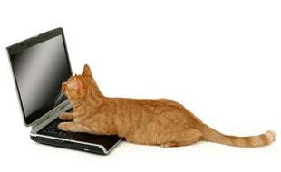 Assurance RC et d�g�ts commis par un chat