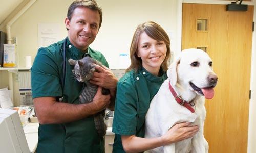 Assicurazione animali i punti da tenere a mente for Assicurazione domestica
