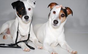 Alles was die Schweizer Hundebesitzer wissen sollten