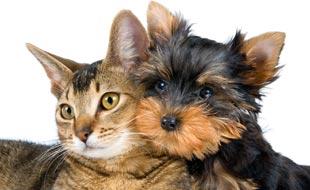 Assicurazione per animali: è utile assicurare il proprio amico a … – bonus.ch (Comunicati Stampa)