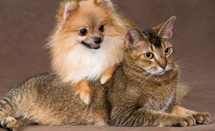 Assicurazione per animali domestici in Svizzera: le ottime ragioni per proteggere il vostro cane o gatto