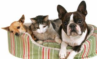 Assurance pour animaux : faut-il assurer son compagnon à 4 pattes ?