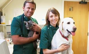 Tierversicherung 2016: Schützen Sie Ihr Haustier